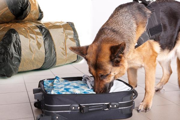 canine drug searches,canine drug searches lawyer,canine drug searches attorney,canine drug searches New Mexico