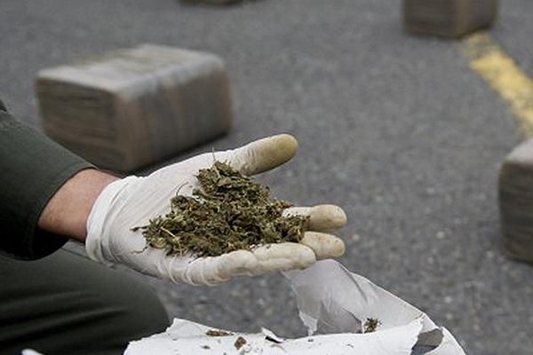 marijuana busts on i-25,marijuana busts on i-25 lawyer,marijuana busts on i-25 attorney,marijuana busts on i-25 in New Mexico